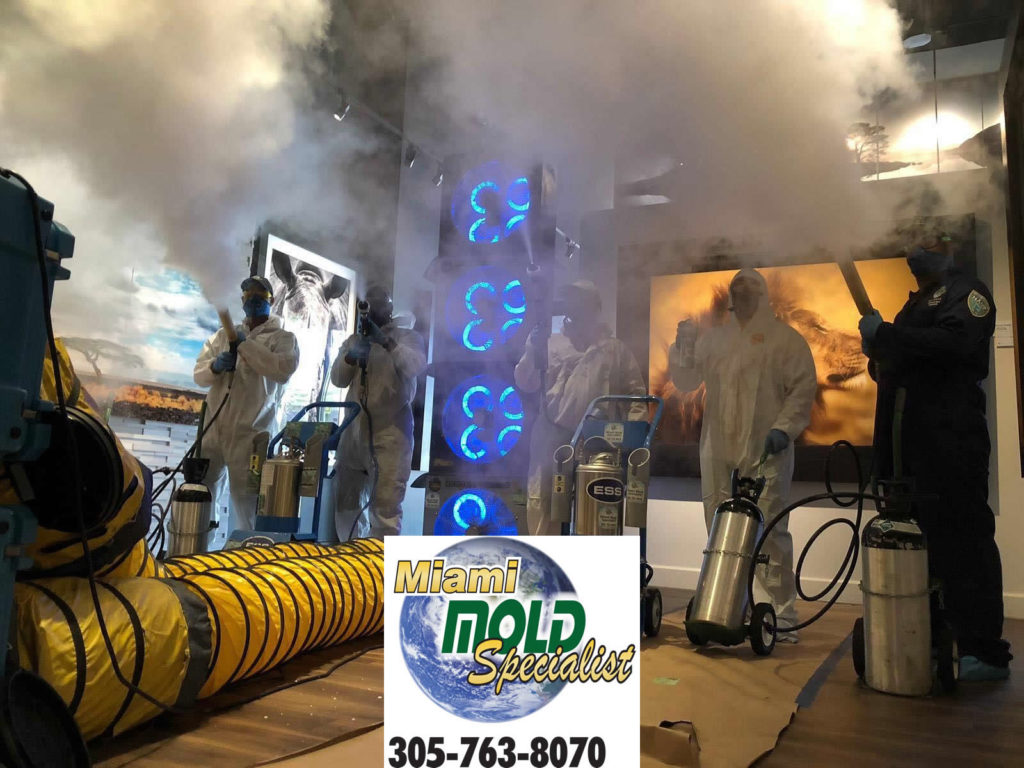South Florida Mold Removal Service Projects- Sept.2019